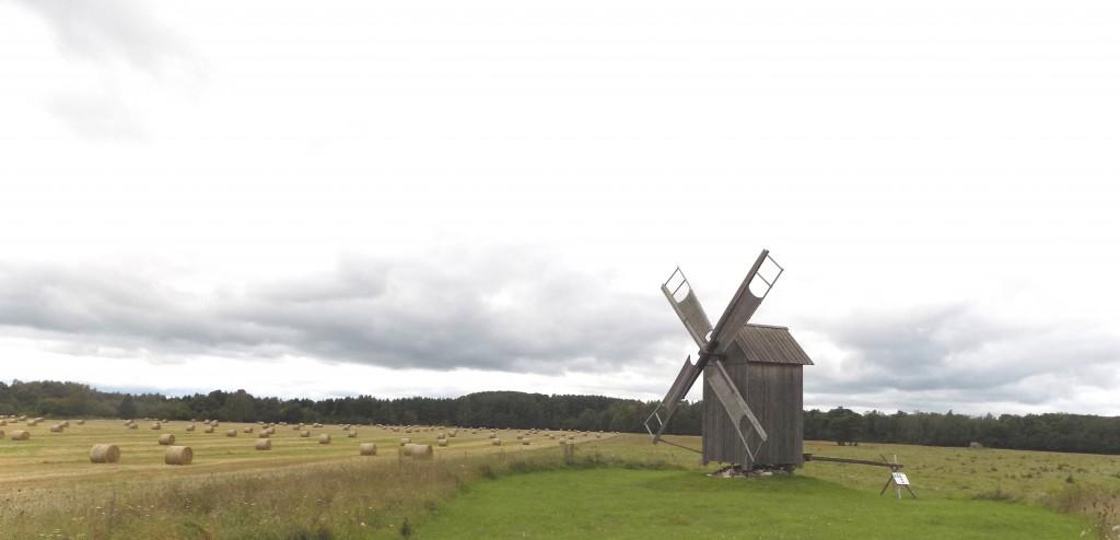 Kukka tuulik Autor K.Koit Kuupäev 30.08.2016