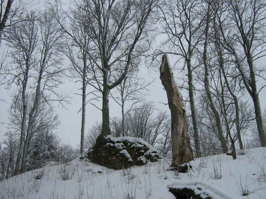 müüril kasvab suur kask  Autor Anne Kivi  Kuupäev  18.03.2009