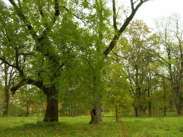 vaade pargile mõisa eest    Autor A. Peterson    Kuupäev  06.10.2004