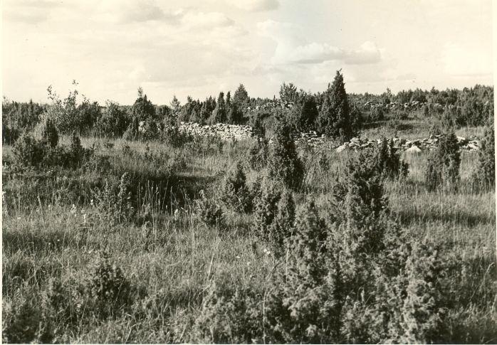 Muistsete põldude jäänused. Foto: A. Sillasoo, 29.09.1976.