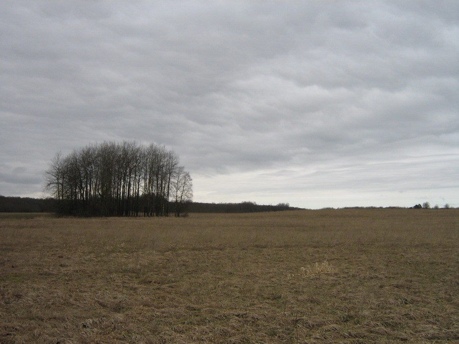 Vaade idast tee poolt  Autor Kalli Pets  Kuupäev  17.04.2009