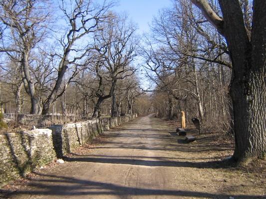 II maailmasõjas hukkunute matmispaik, reg. nr 22300. Vaade lõunast, vasakul matmispaik. Foto: Anne Kaldam, kuupäev 21.04.2009