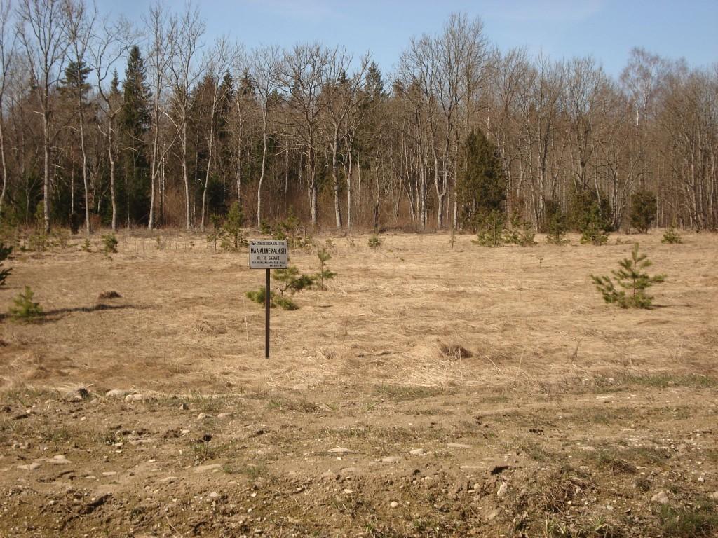 Vaade maa-aluse kalmistu alale Kihlepa-Soomra teelt. Foto: Karin Vimberg, 21.04.2009.