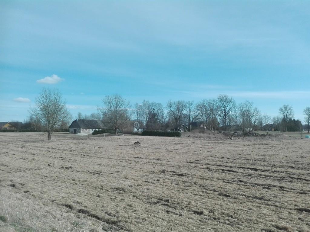 Asulakoht, 9774, Valasti külas, vaade Roosna-Alliku - Järva-Jaani teelt. Foto: K. Klandorf 20.04.2017.