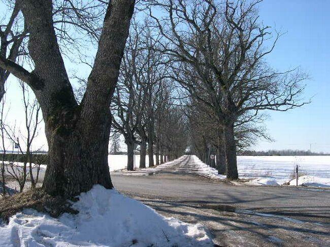 mitme km pikkune allee    Autor R.Pau    Kuupäev  02.03.2004