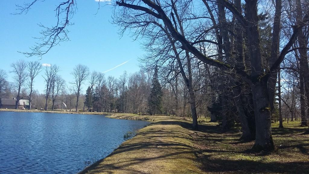 Lustivere mõisa park, tiigi äär Aeg: 03.05.2017  Foto: Sille Raidvere