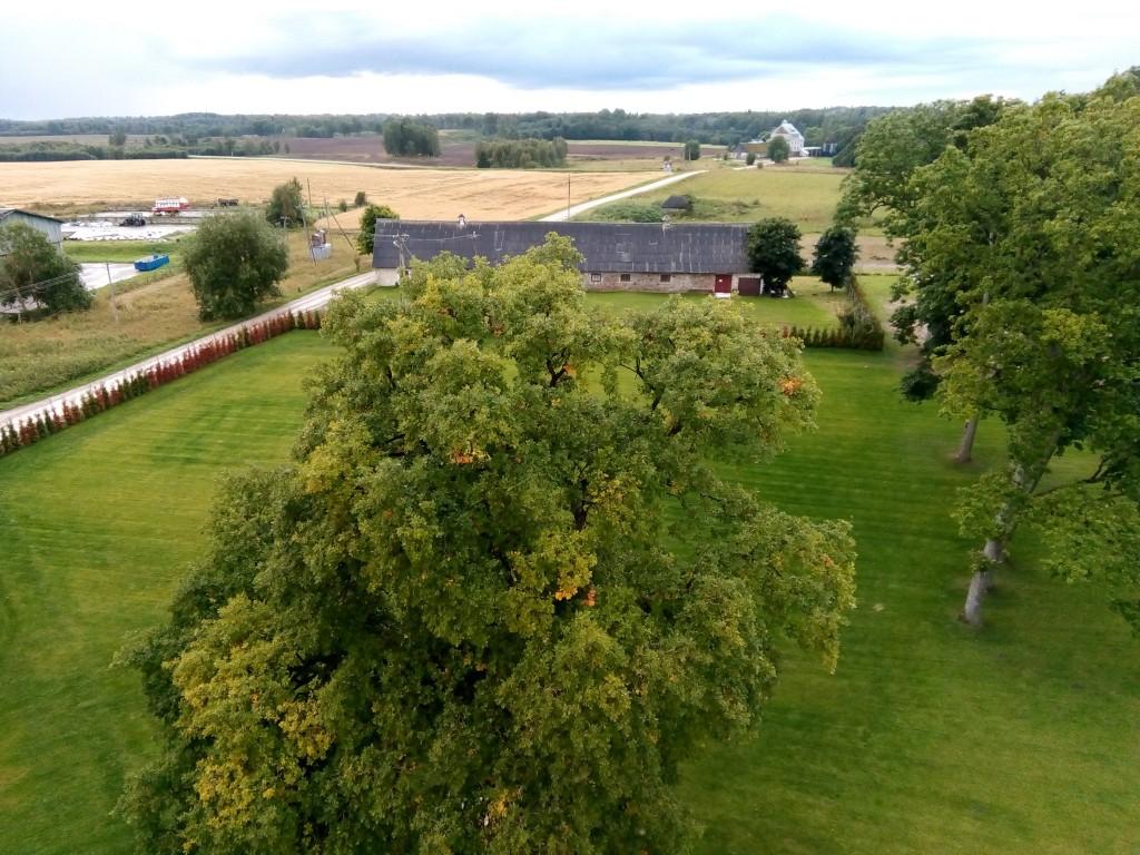 Neeruti mõisa park, vaade tornist pargi edelaosale. Foto: M.Abel, 08.09.17
