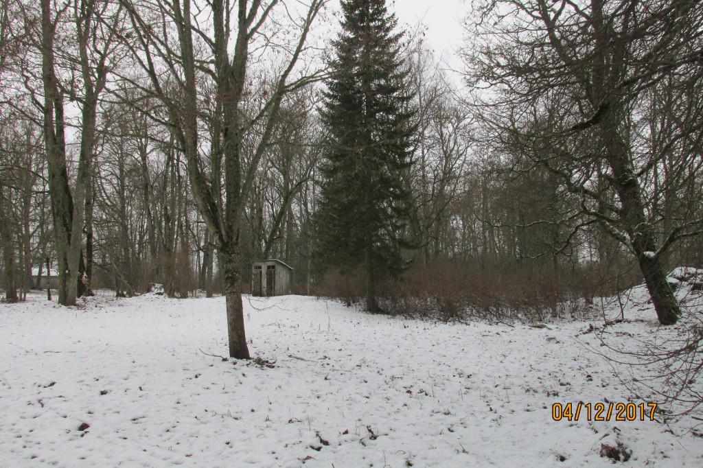 Kiikla mõisa park, 19.saj. Põhjakülg. Foto: Kalle Merilai 04.12.2017. aasta