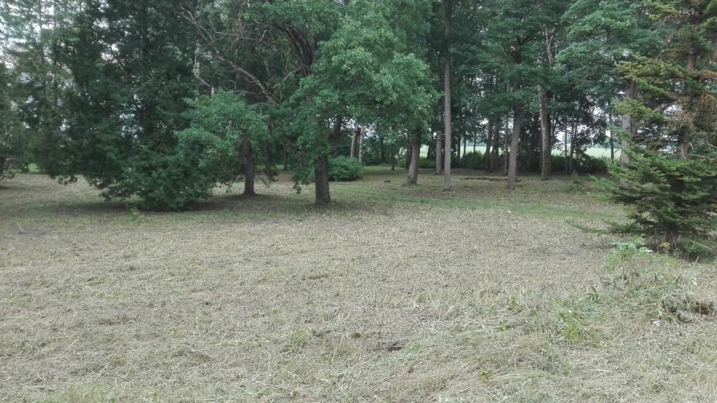 Karinu mõisa park, tagaväljaku vaade peahoone poolt idasuunas. Foto: K. Klandorf 27.07.2018.