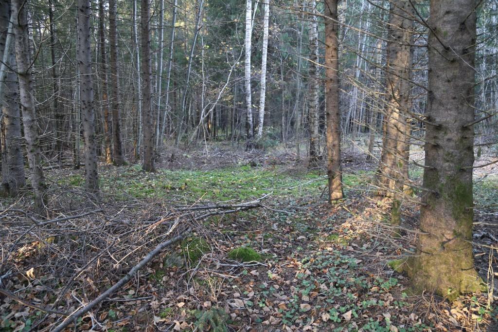 Teest põhja pool olev metsaalune. Vaade lõunasuunast. Foto: Helena Kaldre 19.10.18