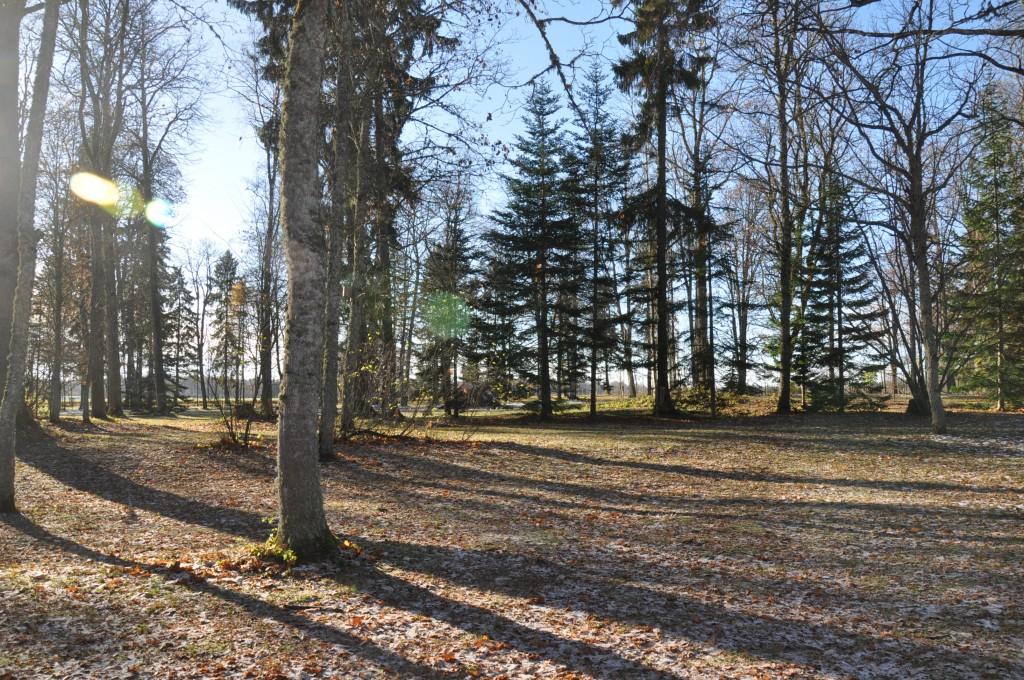 Illuka mõisa park, 19.saj. Foto: Kalle Merilai 29.10.2018.a.