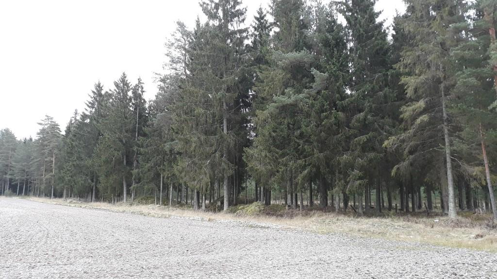 11048-11058 Kääbastik Janukjärve ääres Piigandis. Foto Anu Lepp, 20.11.2018