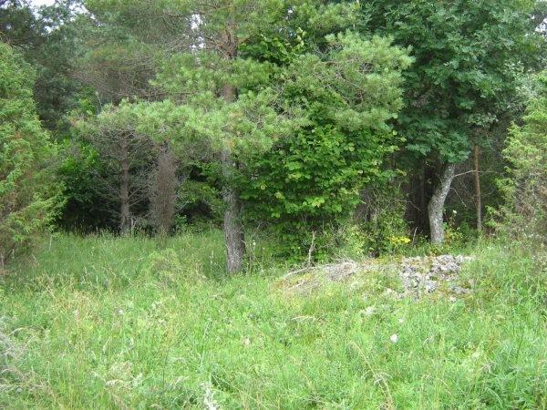 Pidula muistsed põllud. Foto: M. Koppel, 20.07.2009.