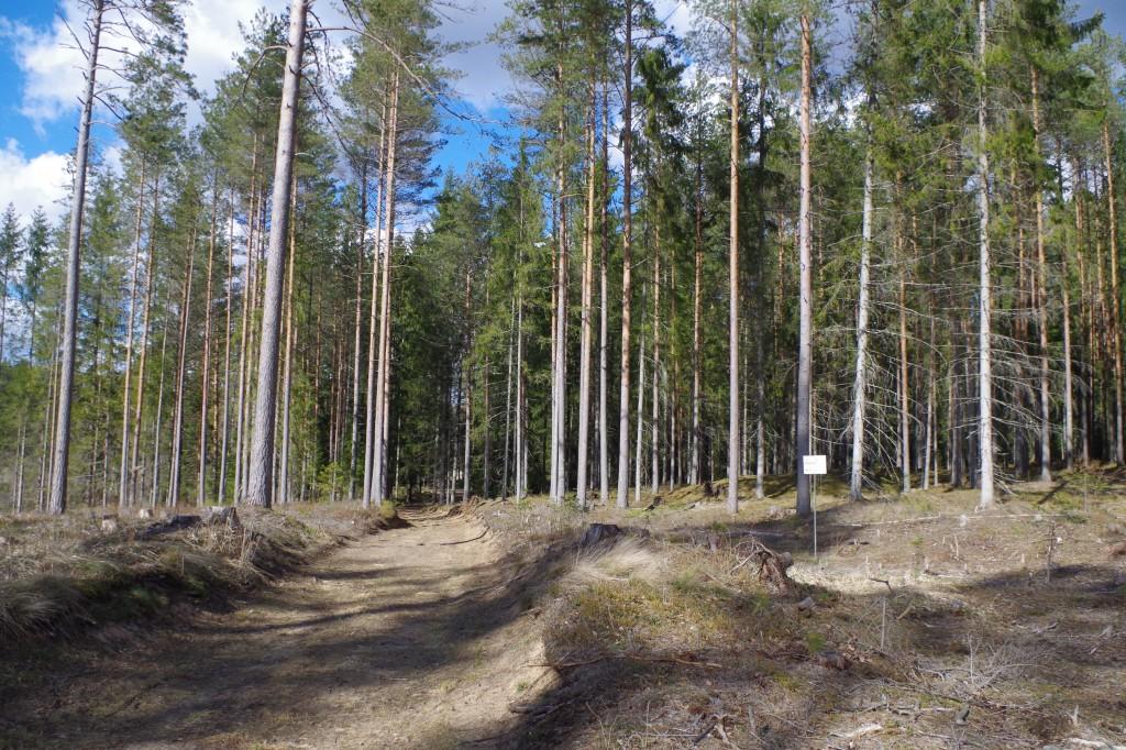Kääbastik 11478-11482 jääb metsateest paremale. Foto Anu Lepp, 27.03.2019