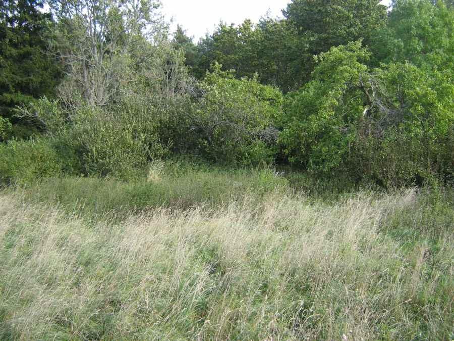 Vaade endisele talukohale, mille hoovil asub kivikalme. Foto: M. Koppel, 2009.