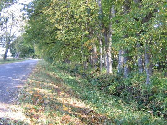 Aaaspere mõisa piirdemüürid reg. nr. 15631, vaade piirdemüüride põhjapoolsele müürile  Anne Kaldam 29.09.2009