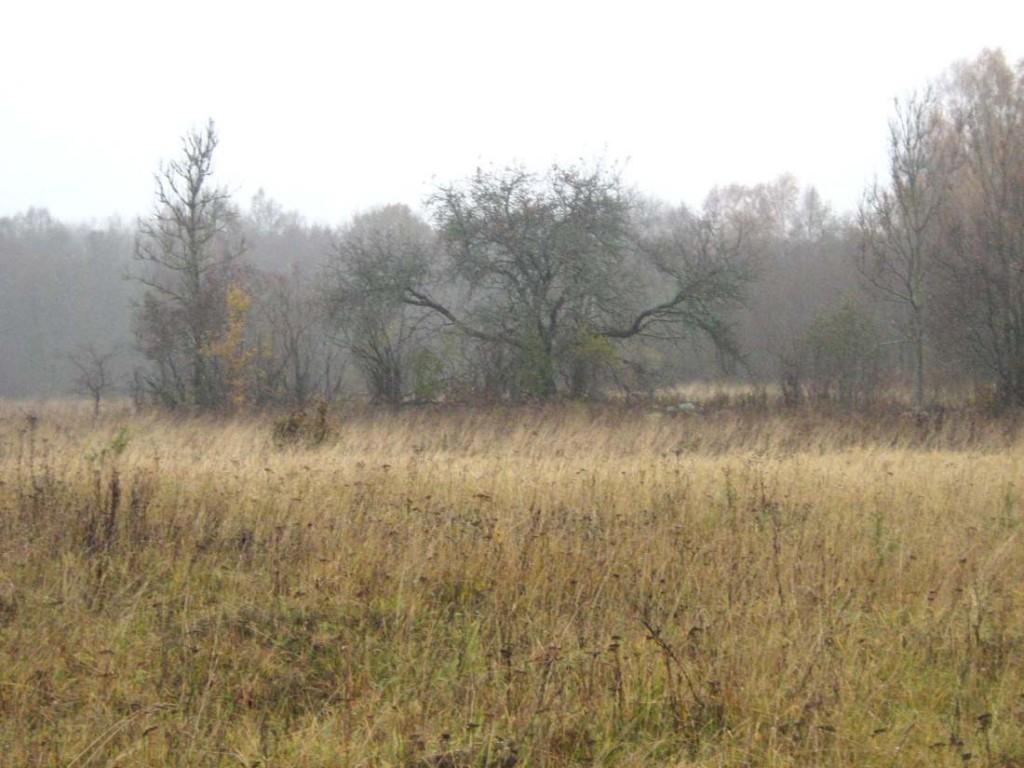 Ohverdamiskoht Mäla külas. Foto: M. Koppel, 2009.