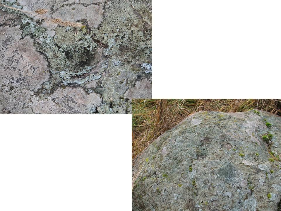 Lohukivi asub endise Jatti talu krundil koplis. Lohke on kivil 15. Foto: M. Abel, 30.10.2009.