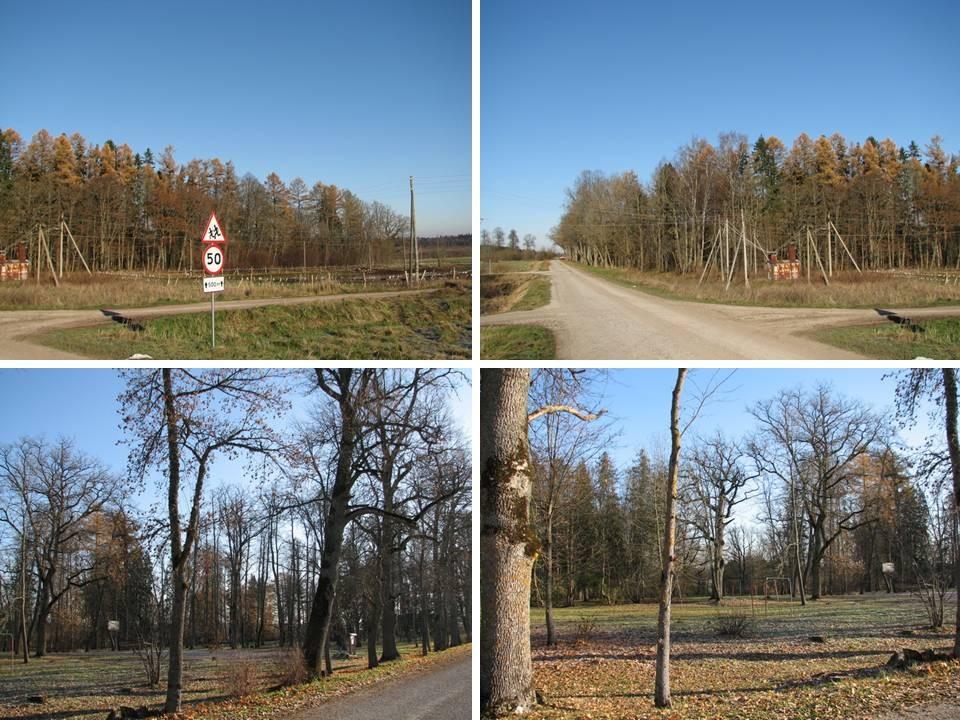 Asulakoht Salla mõisa pargi territooriumil. Asulakoht edelast ja läänest. Foto: M. Abel, 03.11.2009.
