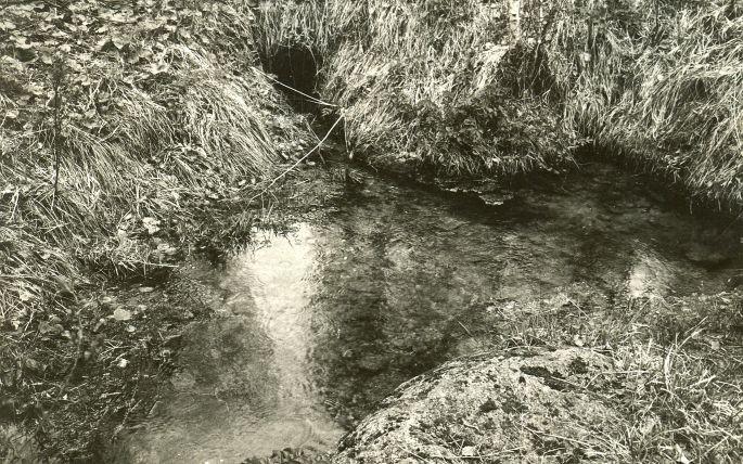 Ohvriallikas - kagust. Foto: E. Väljal, 22.05. ca 1984.