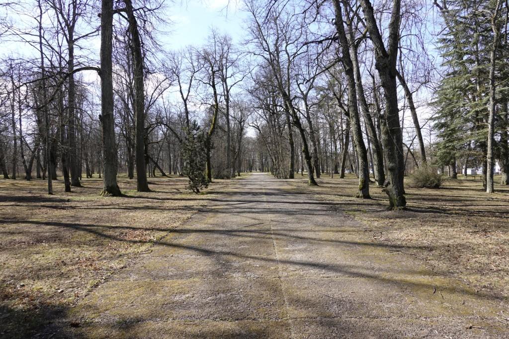 Muuseumi tee 2 mõisapargi põlispuudega osa. Foto Egle Tamm, 11.04.2020.