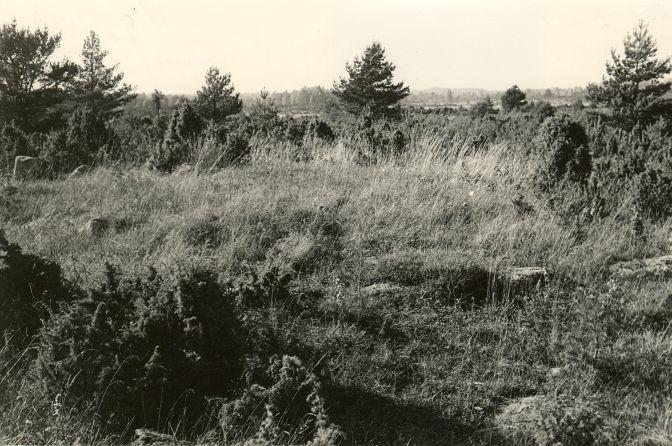 Kivikalme reg nr 12705 (157-k) - idast. Foto: E. Väljal, 06.10.1982.