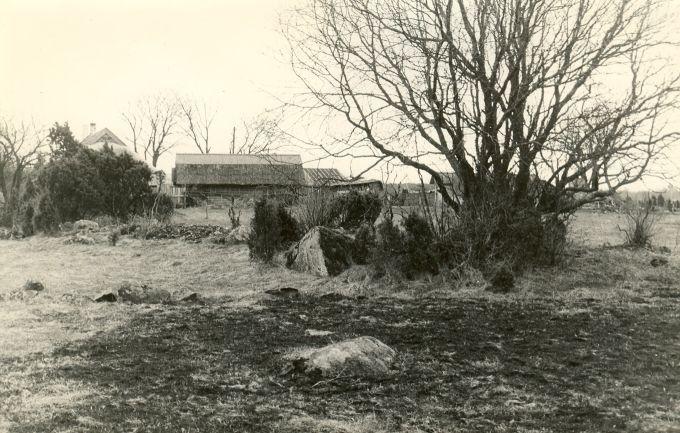 Kivikalme reg nr 12599 (719) - loodest. Foto: E. Väljal, 27.04.1982. (Muinsuskaitseameti arhiiv).