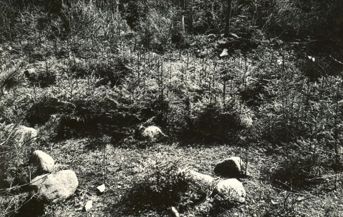 Kivikalme reg nr 12494 (695) - loodest. Foto: E. Väljal, 05.05.1983.
