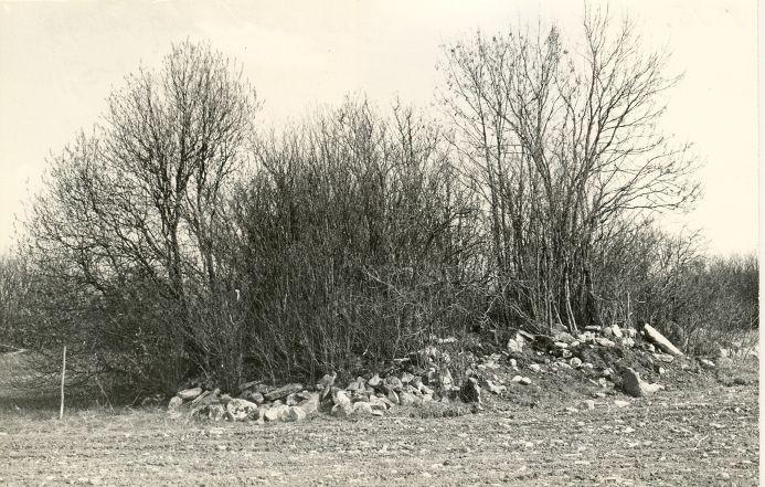 Kivikalme reg nr 12586 (2515) - loodest. Foto: E. Väljal, 10.05.1982. (Muinsuskaitseameti arhiiv).