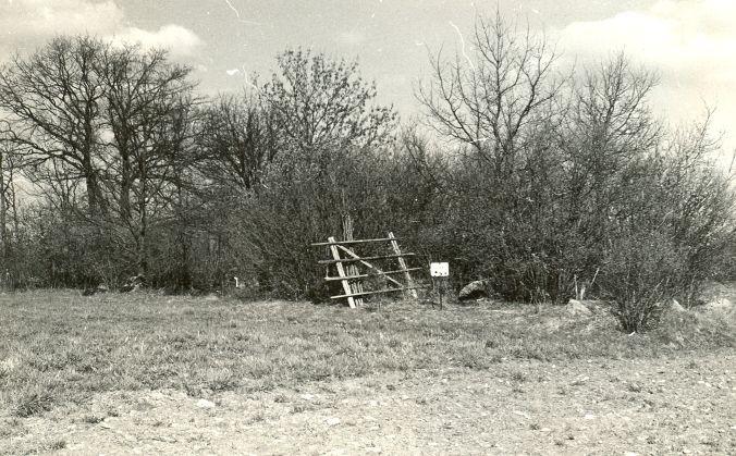 Kivikalme reg nr 12587 (2516). Foto: E. Väljal, 10.05.1982. (Muinsuskaitseameti arhiiv).