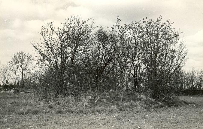 Kivikalme reg nr 12583 (2511) - edelast. Foto: E. Väljal, 10.05.1982. (Muinsuskaitseameti arhiiv).