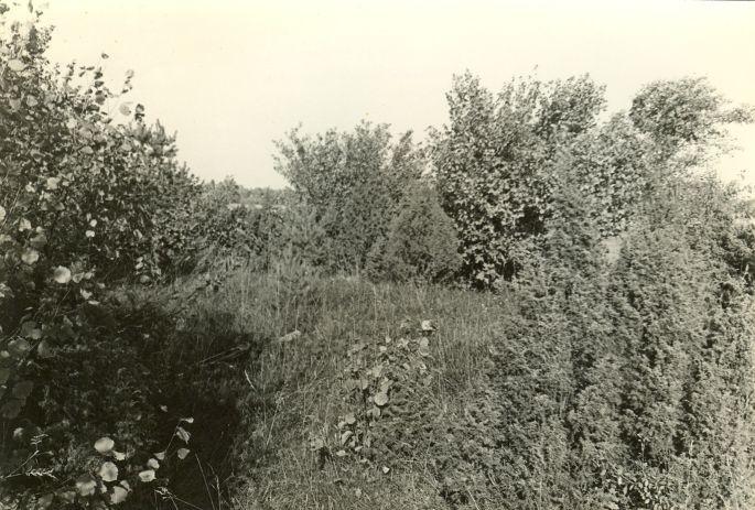 Kivikalme reg nr 12569 (2514) - lõunast. Foto: E. Väljal, 04.10.1984.