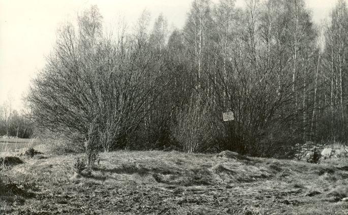 Kivikalme reg nr 12572 (2500)  - lõunast. Foto: E. Väljal, 10.05.1982. (Muinsuskaitseameti arhiiv).