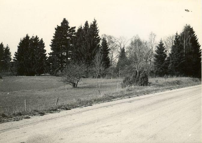 Kiviaja asulakoht reg nr 12402 (660) - kirdest. Foto: E. Väljal, 05.05.1980ndad aastad.