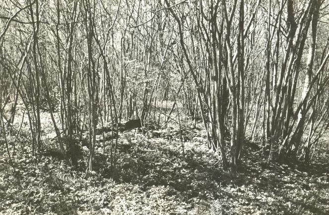 Kivikalme reg nr 12476- idast. Foto: E. Väljal, 20.05.1985 (Muinsuskaitseameti arhiiv).