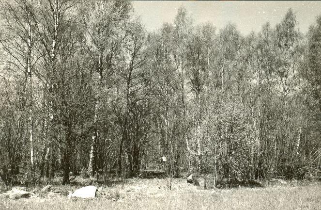 Kivikalme - kagust. Foto: E. Väljal, 20.05.1985. (Muinsuskaitseameti arhiiv).