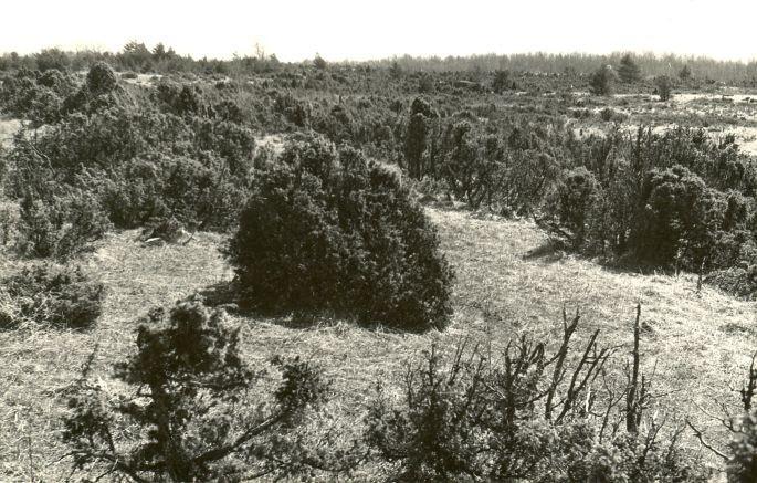 Kalmeväli - loodest. Foto: E. Väljal, 11.05.1982. (Muinsuskaitseameti arhiiv).