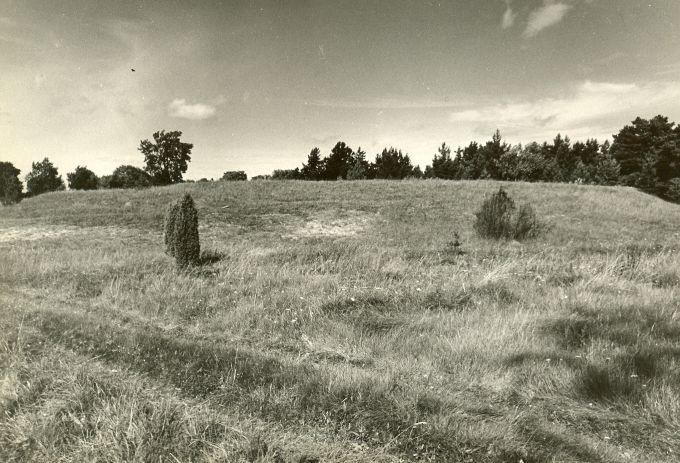 Linnamägi reg nr 12537 (711). Foto: E. Väljal, 18.08.1981.