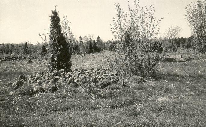 Kivikalme reg nr 12553 (185-k) - kagust. Foto: E. Väljal, 14.05.1980ndad aastad.
