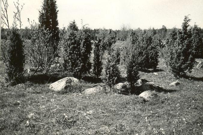Kivikalme reg nr 12557 (189-k) - kagust. Foto: E. Väljal, 14.05.198....