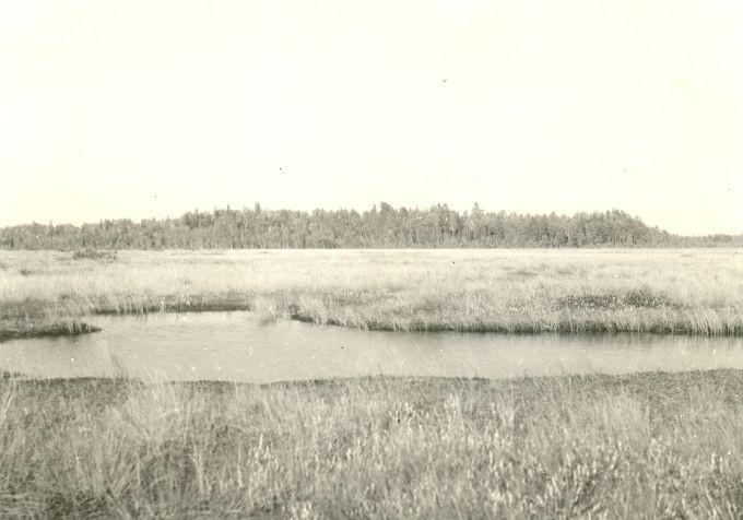 Pelgupaik lõunast. Foto: H. Joonuks, 1974.