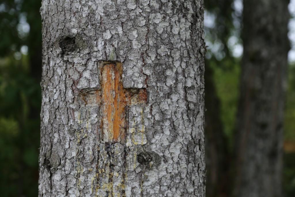 Lähivaade ristipuu ristile. Foto: Pikne Kama, 17.09.2020