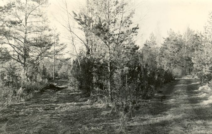 Ohverdamiskoht reg nr 12532 (707) - lõunast. Foto: E. Väljal, 27.04.1980ndad aastad.