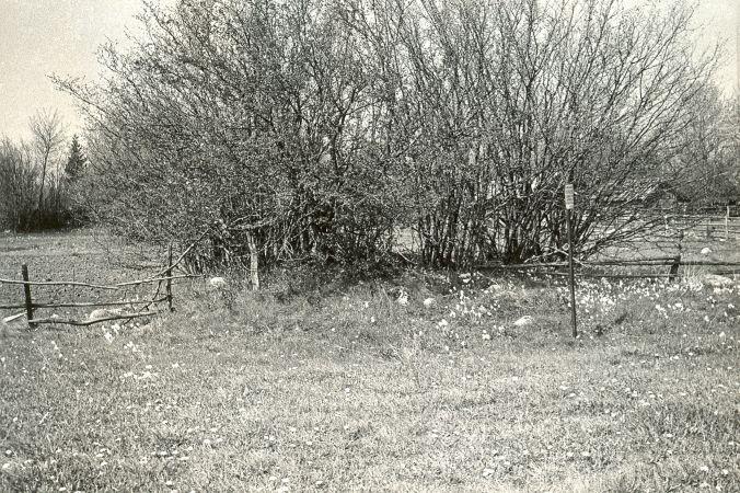 Kivikalme reg nr 12356 (17-k) - lõunast. Foto: E. Väljal, 16.05.198...