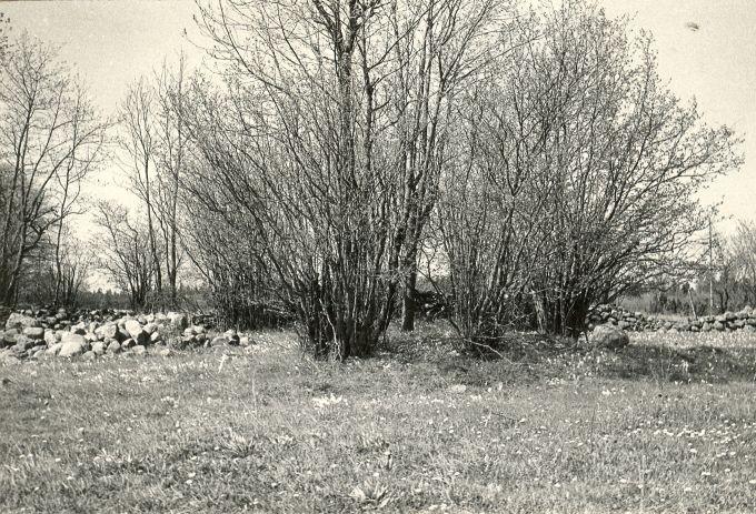 Kivikalme reg nr 12353 (14-k) - lõunast. Foto: E. Väljal, 16.05.198...