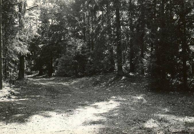 Muistsete põldude jäänused reg nr 12344 (51-k) - loodest. Foto: E. Väljal.