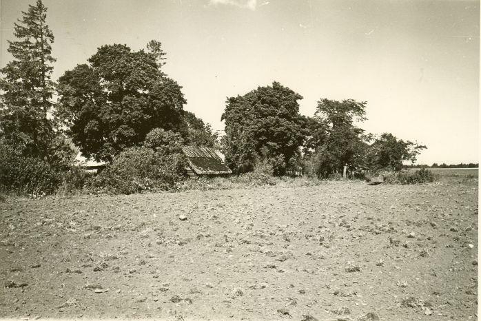 Asulakoht kagust. Foto: H. Joonuks, 1979.