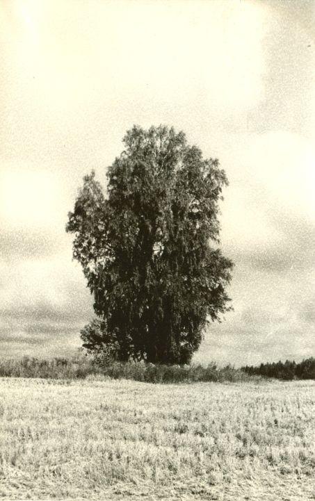 """Kivikalme """"Kalmuvare"""". Foto: H. Joonuks, 1971."""