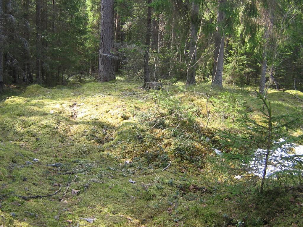 Vaade kääbaskalmistu (13 kääbast) viimasele põhjapoolsele kääpale.