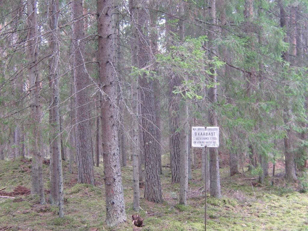 Vaade kaitsetahvlile. Suurte puude taga paistab ka kääbas ise. Foto: Viktor Lõhmus, 21.04.2010.
